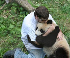 Фото. Даже панды нуждаются в объятиях