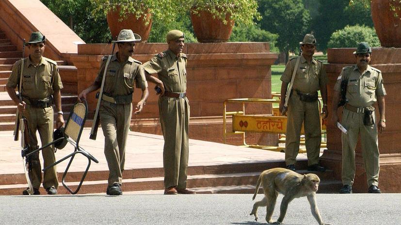 Фото. Макаки-резусы в Нью-Дели добрались до здания парламента