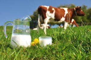 Фото. Вслед за молоком подорожают и все продукты его содержащие