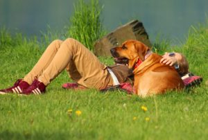 Фото. Хозяева крупных пород собак сами должны осознавать свою ответственность.