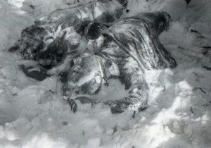 Фото. Искажённую внешность погибших эксперты объяснили воздействием природной стихии