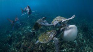 Фото. Гибель многих видов морских животных вызвана поеданием пластиковых пакетов