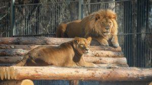 Фото. Новосибирский зоопарк